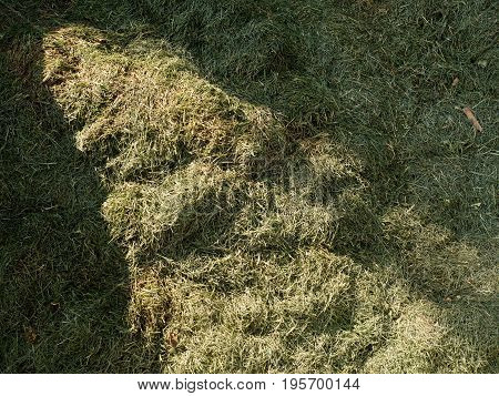 Terrible Smell Rotten Grass. Decay Harvested Grass In Green Mound In Garden.