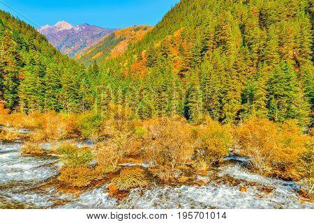 Autumn view of Pearl Shoals with pure water. Jiuzhaigou nature reserve, Jiuzhai Valley National Park, China