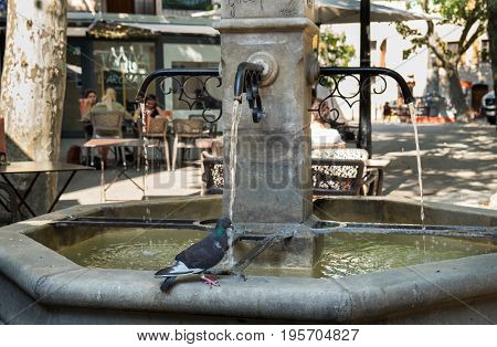 Pigeon drink water at the fountain in Manosque. Alpes de Haute Provence France