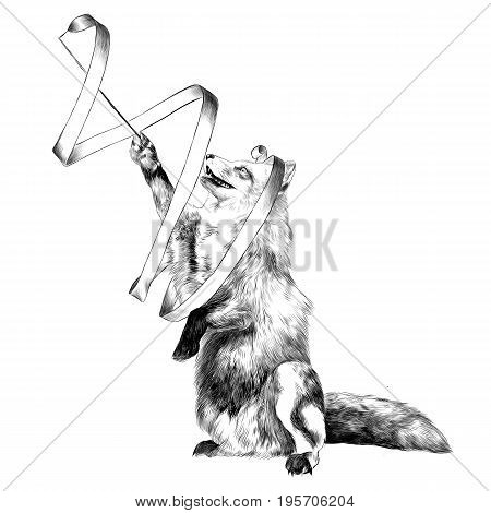 a Fox on its hind legs in a circus with a ribbon in his paw gymnast sketch vector graphics black and white drawing