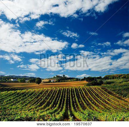 Beautiful vineyard in Italy at sunset...