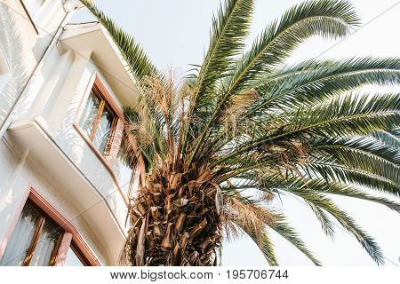 Palm tree next to a house in an exotic country. Hot climate.