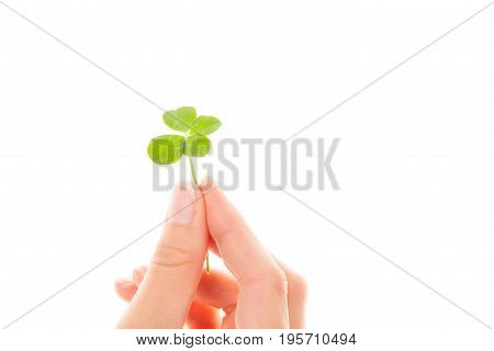 Lucky clover leaf in female hand isolated on white background. Faith hope love and luck. Four-leaf clover.