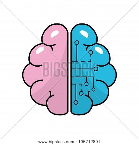 anatomy brain with circuits digital connection vector illustration