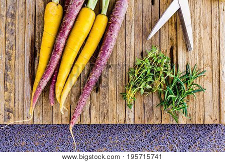 Fresh home grown tri colored carrots on a cutting board with thyme and rosemerry herbs. The carrots are purple and yellow. A pair of herb sissors are also shown.