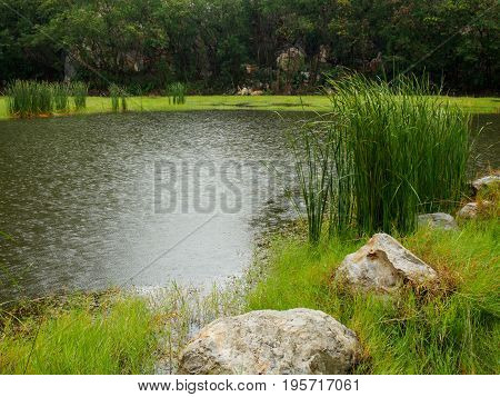 Wide-angle view of a pond with trees tall grass and stones while raining. Khao Ngu Stone Park Ratchaburi Thailand. Travel and environment concept.