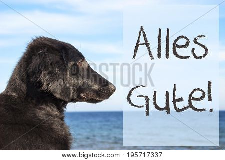 German Text Alles Gute Means Best Wishes. Flat Coated Retriever Dog Infront Of Ocean. Water In The Background