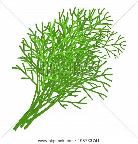 Dill icon. Cartoon illustration of dill vector icon for web