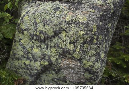 Colorful Lichen On Rock