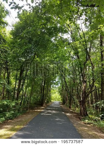 black asphalt path or trail through the forest with green trees
