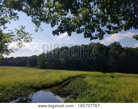 green trees and plants in wetland marsh area with creek