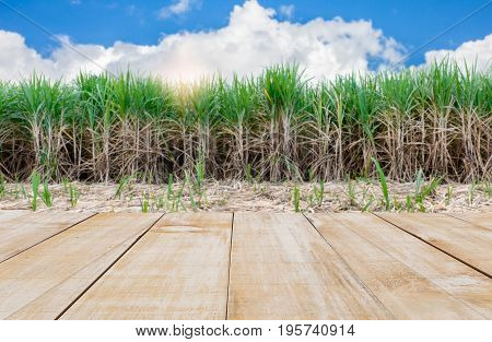 wood table space with sugarcane field and blue sky