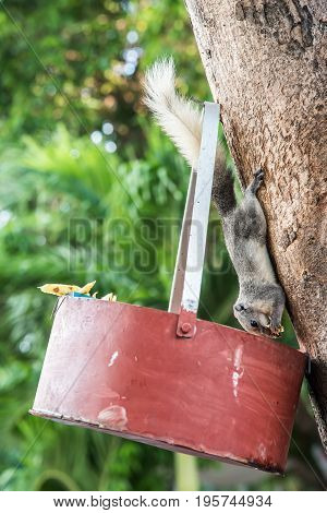 squirrel, animal and pet in the natural park