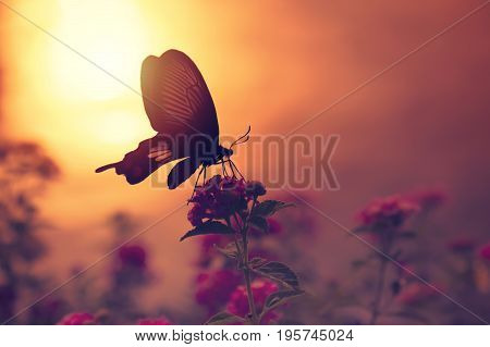 Shadow of butterfly on flowers with sunlight reflection from water in background. Light of peace concept