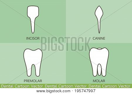 dental cartoon vector - tooth type - incisor canine premolar molar