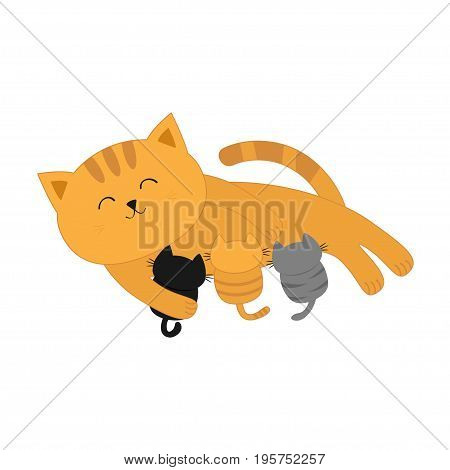 Cat mother feeding kittens. Mom kitty laying on the floor and nursing little cats. Milk feed. Breastfeeding pet animal. Cute cartoon character Flat design White background Isolated Vector illustration