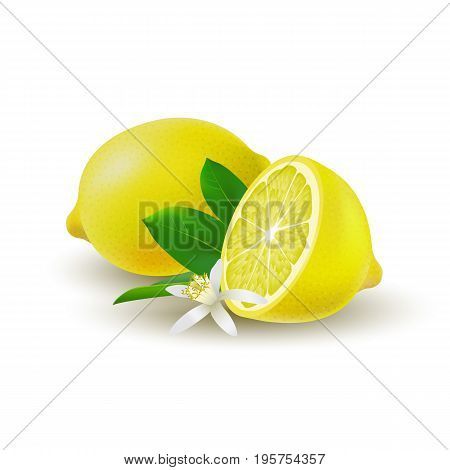 Isolated colored group of lemons half and whole juicy fruit with green leaves white flower and shadow on white background. Realistic citrus