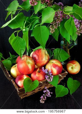 Nectarines in a wicker basket and branches of lilac on a dark background