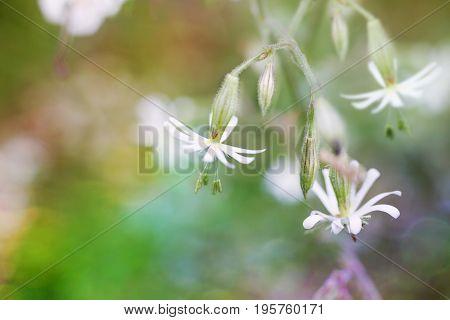 Magic Wildflowers.