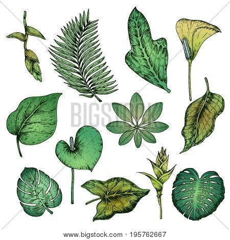 Green hand drawn tropical plants set with coconut palm monstera and frangipani leaves isolated vector illustration