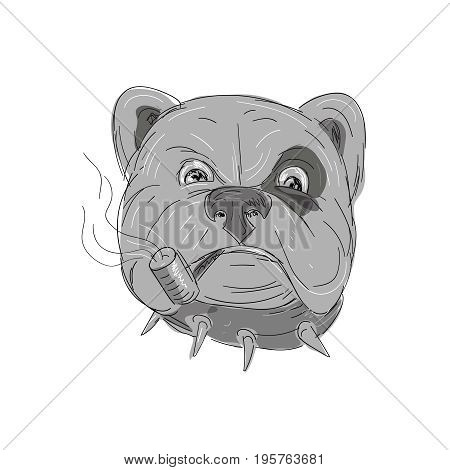 Illustration of an Angry Bulldog with studded collar and spot Smoking Corn Cob Pipe done in hand Drawing and sketch style on isolated background.