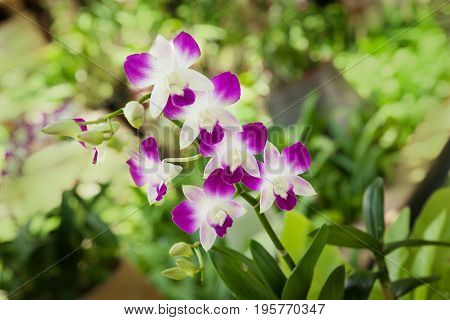 Wild blossoming exotic tropical purple and white plant on green blurry background