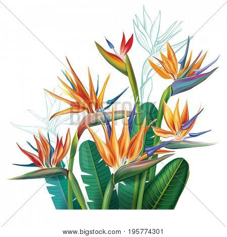 Floral bouquet with Strelitzia flowers on white. Raster version