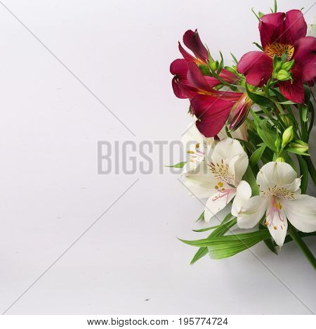 White and red Alstroemeria. White flowers