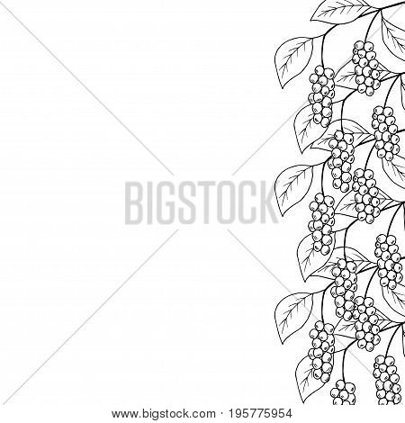 Branch with berries of Chinese Schisandra, isolated on white. One of the best adaptogen herbs for stress relief. Decorative border, frame, template.