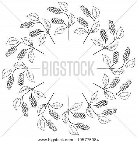 Branch with berries of Chinese Schisandra, isolated on white. One of the best adaptogen herbs for stress relief. Decorative border, round frame, template.