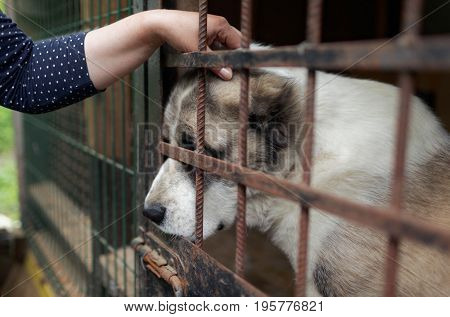 ST. PETERSBURG, RUSSIA - JUNE 30, 2017: Employee and a dog in the shelter for homeless animals of the foundation Vernost. About 40 big dogs living in the shelter today