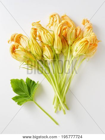 Yellow zucchini blossoms. Fresh zucchini flowers on white background.