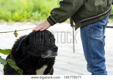 boy is stroking the head of a black stray dog a mongrel with sad eyes two 2