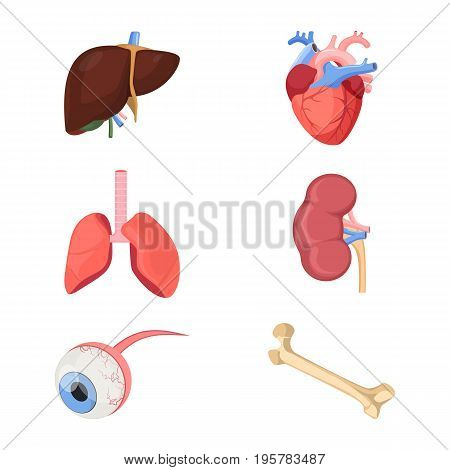 Medical human organs realistic heart, two lungs, kidneys with arterial and venous veins, eyeball, liver and bone set of vector illustrations isolated on white for 3D printer