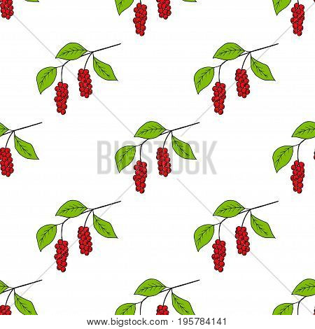 Branch with berries of Chinese Schisandra, in color, isolated on white. One of the best adaptogen herbs for stress relief. Seamless pattern.