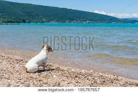 Small dog looking over the peaceful turquoise water of Lac d'Annecy in the South of France