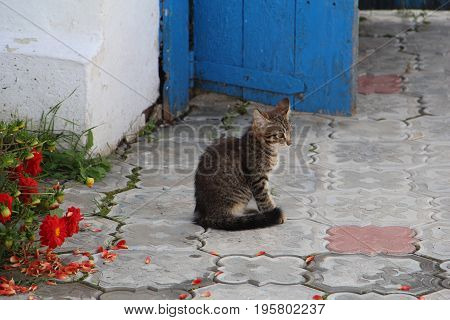 Kute kitten sitting on stone floor near blue wooden door and red flowers