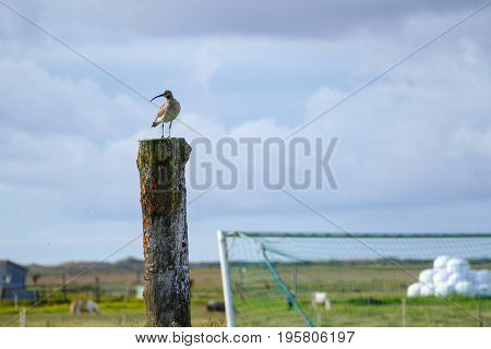 Sea Bird Seitting On A Wooden Column