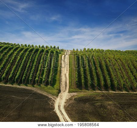 Photos vineyard with the path and blue sky