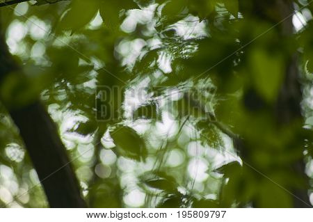 A multitude of leafs of a tree shining from below and blurred: a view of a drunken person
