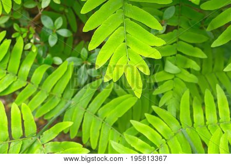 Fern Leaves In Isabella Plantation