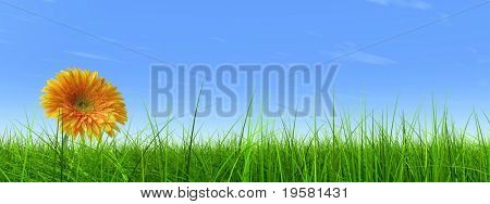 high resolution 3d green grass over a blue sky as background and a nice yellow gerbera flower at horizon. Ideal for nature,green or sport designs.