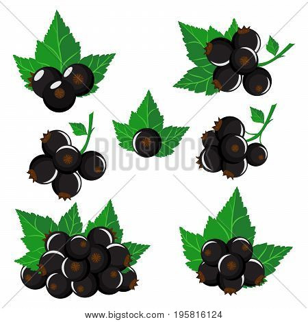 Isolated black currants. Collection vector of black currant berries of different shapes with green leaves isolated on white background.