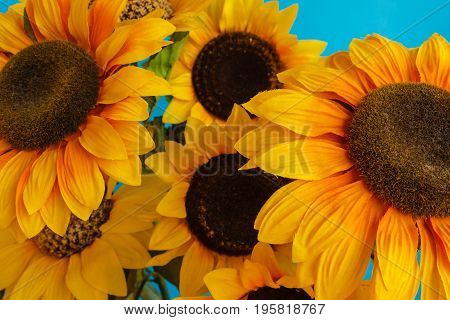 a set of flowered sunflowers in a jar /close-up of flowered sunflowers