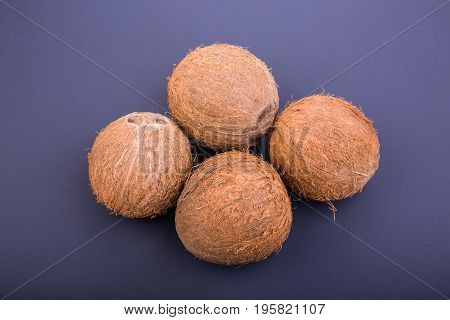 Four tropical and exotic coconuts on a dark purple background. Nutritious exotic nuts. Tasty and bright brown nuts. Whole and sweet cocos. Fresh, ripe and organic fruit of coconuts.