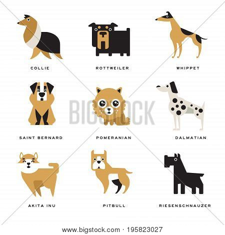 Collection of different dogs breeds characters and lettering breed in English vector Illustrations on a white background