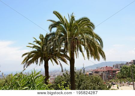 Palm trees closeup in famous Park Guell, Barcelona, Spain