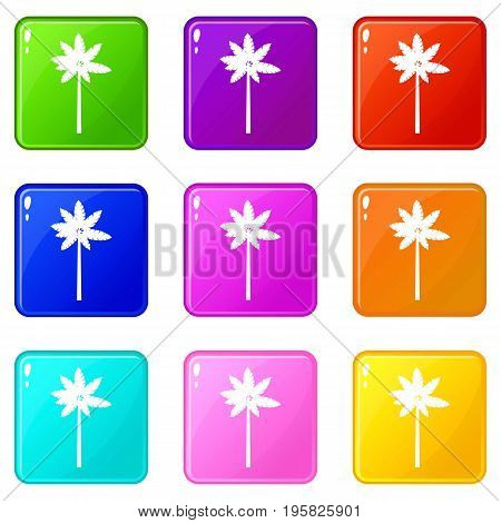 Palm woody plant icons of 9 color set isolated vector illustration