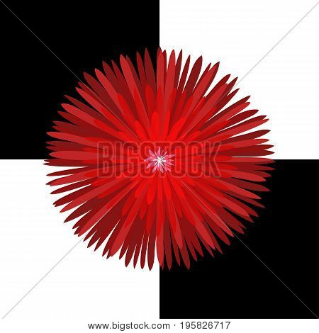 Bright red glowing chrysanthemum on a black and white checkered field