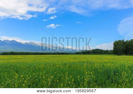 A green glade against the backdrop of the mountains in Siberia